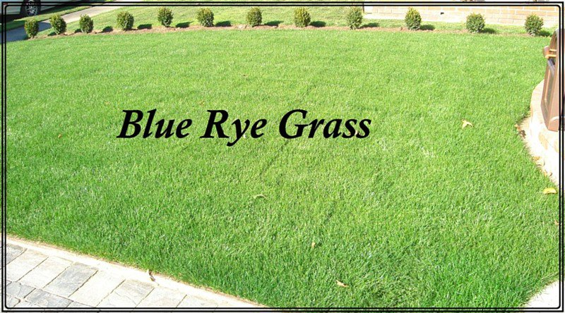 Sod Artificial Grass Garden Supply Hardscapes In San Jose